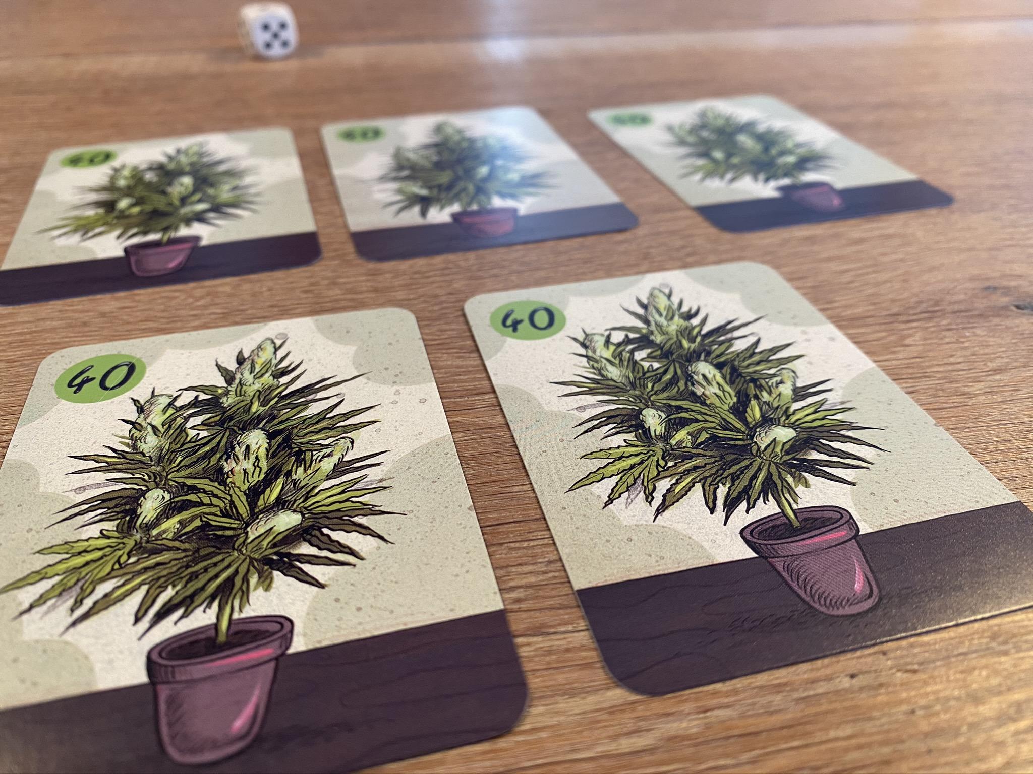 Cannabis plants - basic 40 points
